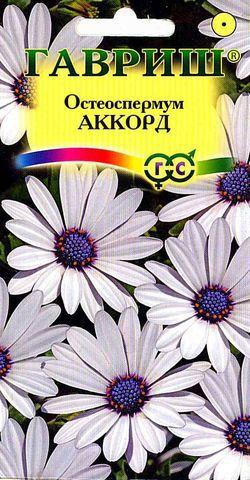 Семена остеоспермума Аккорд (белый) 0,1г ( Г )