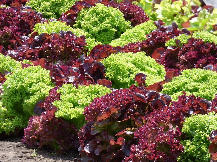 салат витаминная зарядка арт. 5422