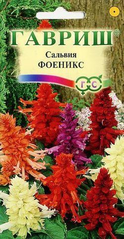 Семена сальвии Феникс смесь ( Г )