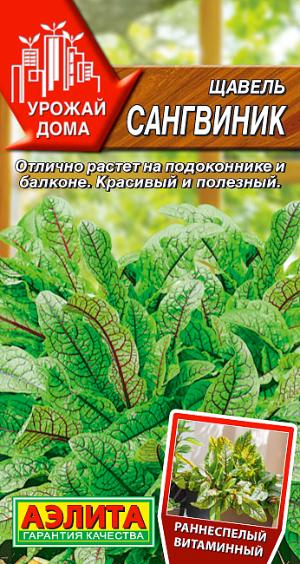 Щавель Сангвиник --- Урожай дома