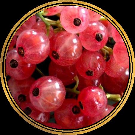 Саженец Смородины розовой Роза Чайр : фото и описание