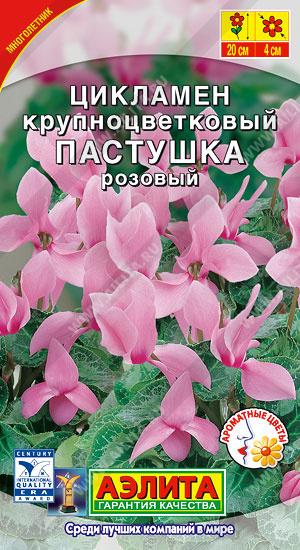 Семена цикламена Пастушка персидский розовый